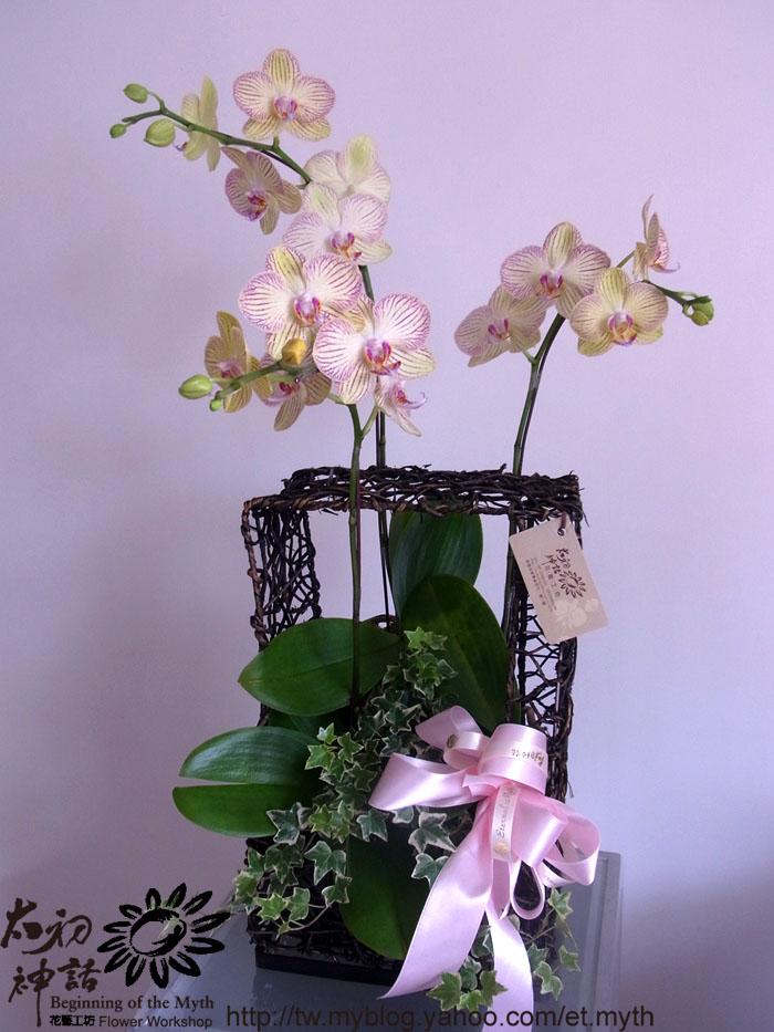 兰花部位的名称图解